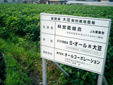 大豆は管理された契約農場で栽培