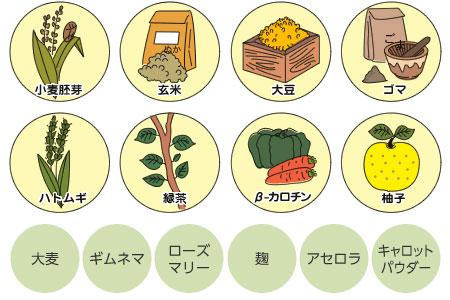14種類の自然の植物
